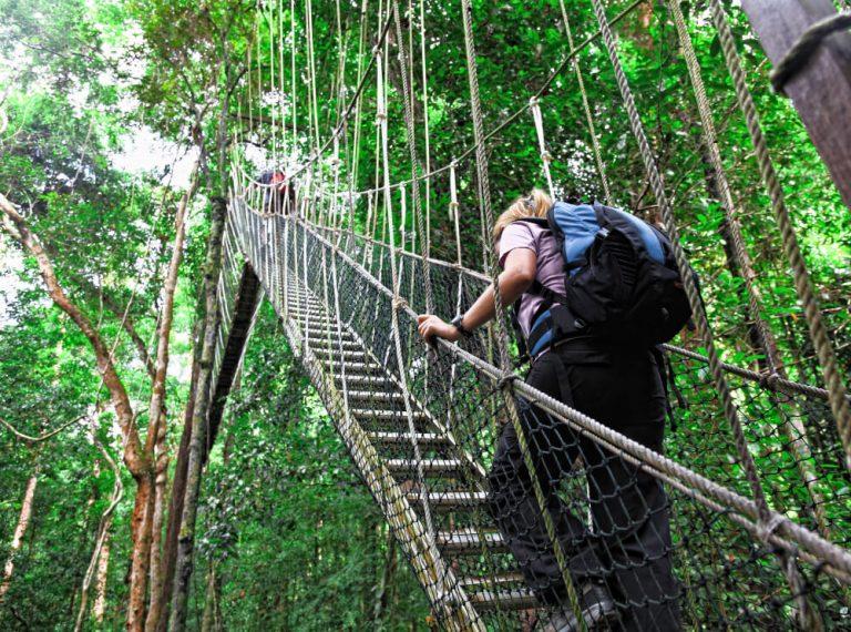 canopy-bridge (2)